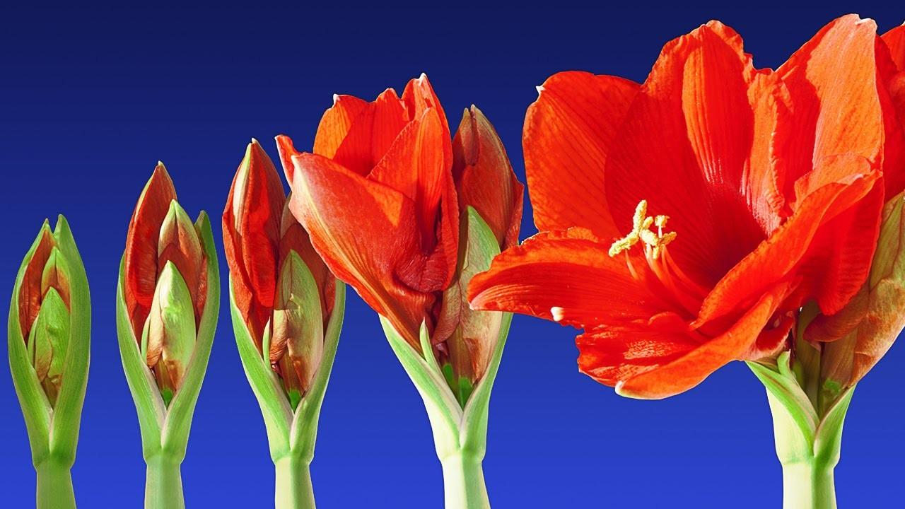 flowers-blooming